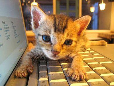 パソコンの上の猫TOP