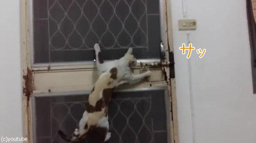 ドアから脱出する猫03
