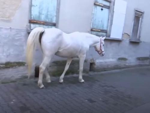 ドイツに1人でお散歩をする馬
