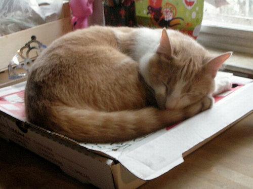 ピザ猫07