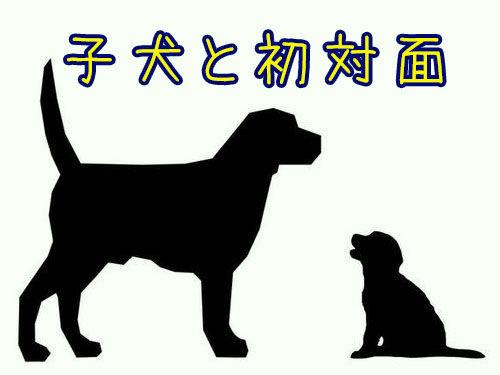 犬と子犬00