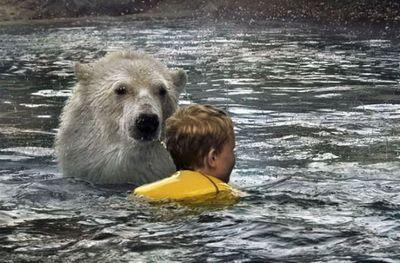 シロクマと泳ぐ01