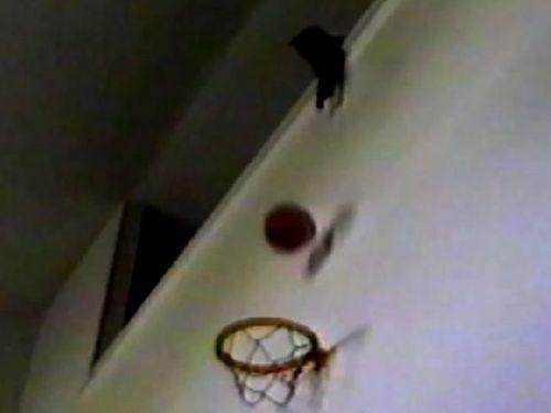 バスケが得意な猫01