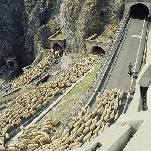 羊飼いの楽しみ08