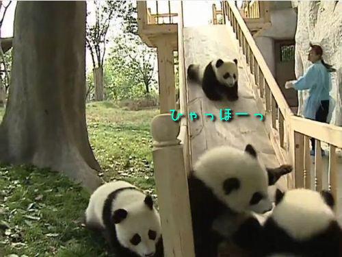パンダのすべりだい