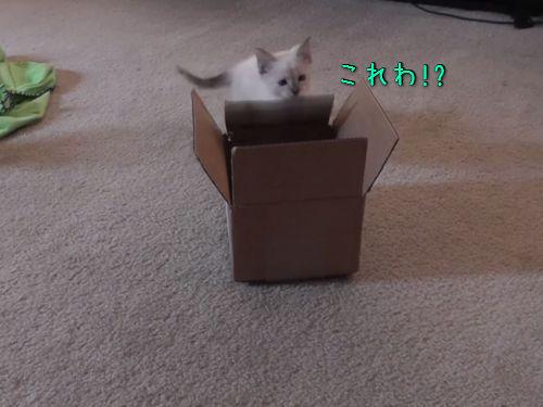 子猫とダンボール箱00