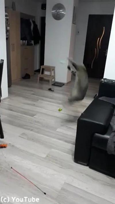 キャッチボール上手な猫04