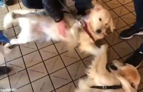 シアトルで出会った犬たちが姉妹だった02