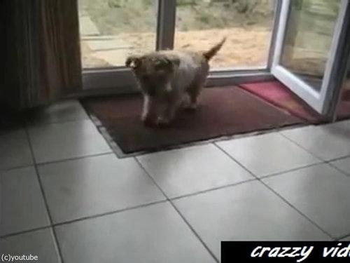 肉球をキレイキレイする犬04