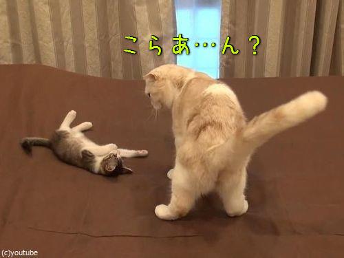 怒られた子猫の謎ポーズ00