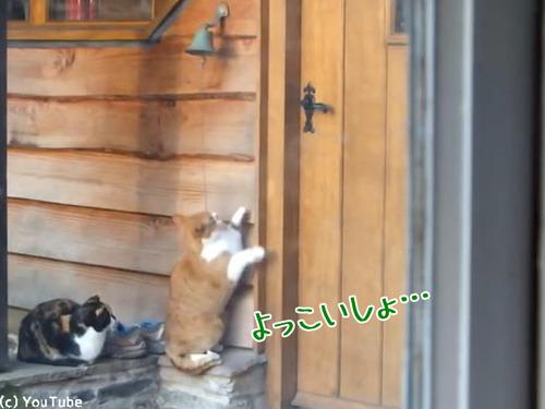 猫「ごはんくださいニャ—」00