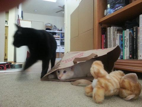 猫が「スパイvsスパイ」06