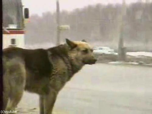 ロシア版の忠犬ハチ公03