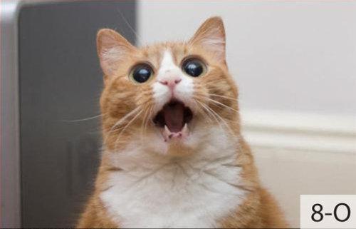猫の顔文字09