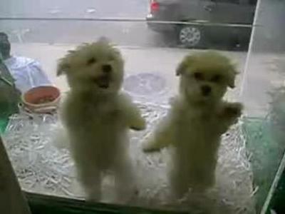 サルサを踊る子犬