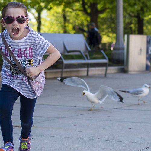 姪がカモメを追いかけた02