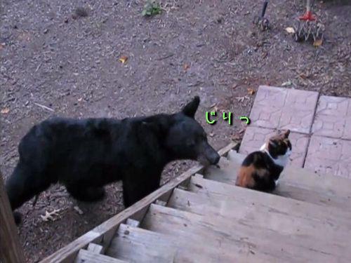 クマと猫00