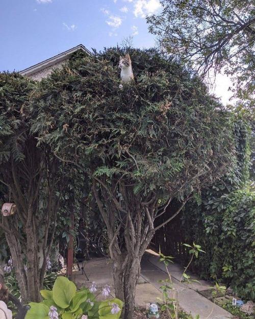 鳥のように木に止まる猫たち01