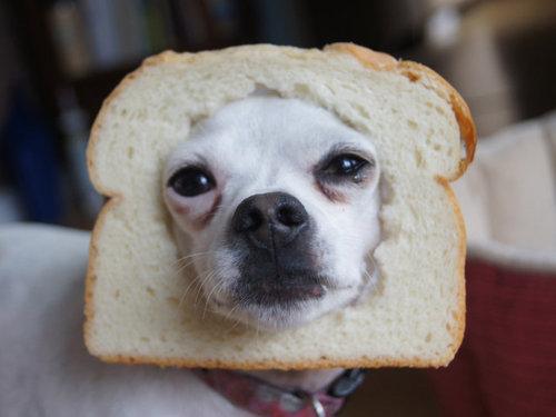 犬とパンの耳04