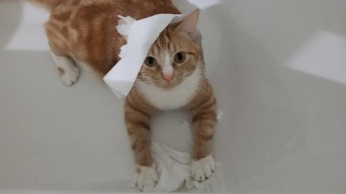 「あなたの猫を1枚の写真で表現しなさい」01