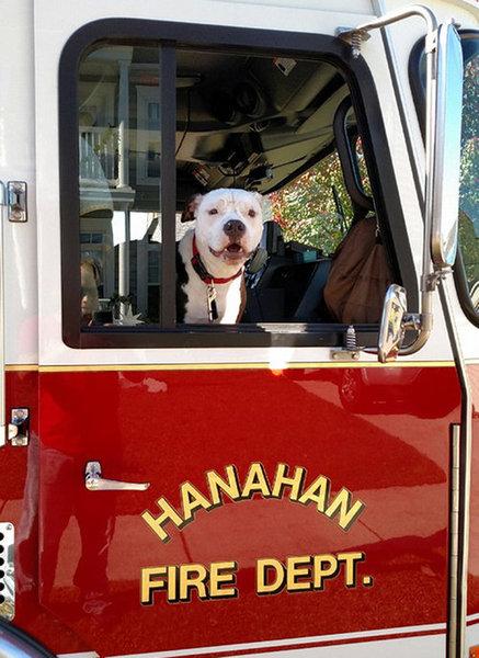 火災から救出された子犬、消防士に12