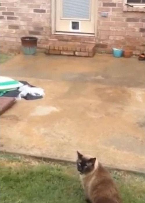 猫にペットドア01