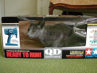 狭い所に入りたがる猫09
