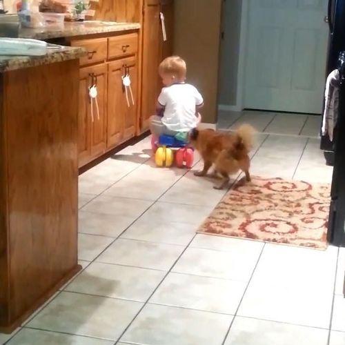 赤ちゃんをフェッチする犬04