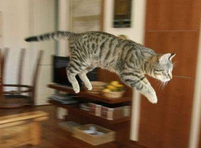 猫ジャンプ02