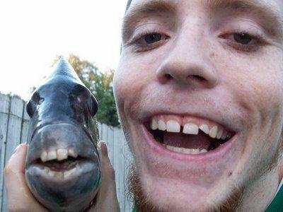 人間のような歯を持つ魚TOP