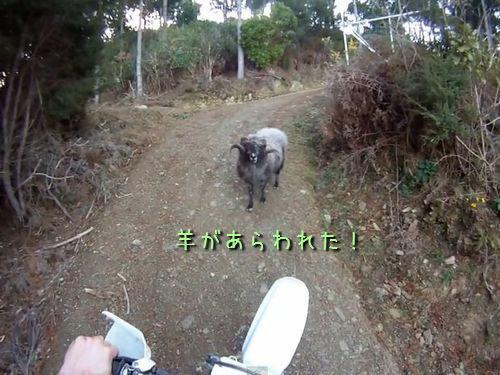 羊が現れた00