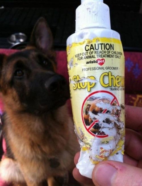 犬の「かじり防止スプレー」が皮肉なことに02