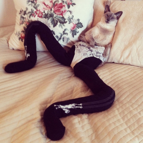 足の長い猫グッチ07