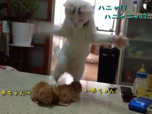 子猫と猫00