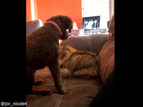 ワンコが猫を撫でたら00