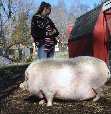 太りすぎ動物08