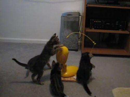 思うままに釣られる子猫たち04
