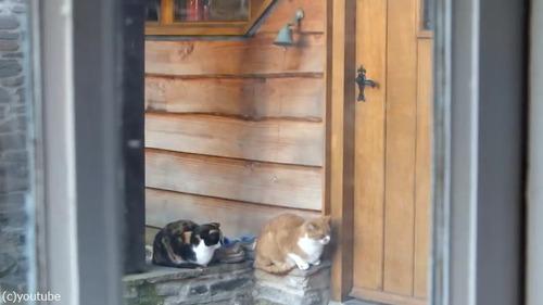 猫「ごはんくださいニャ—」01