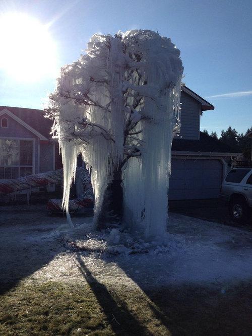 寒冷地仕様のクリスマスツリー01