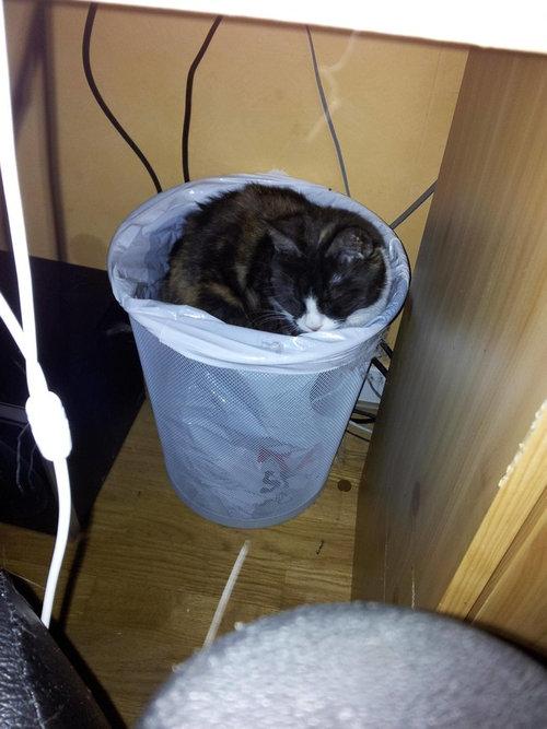 どこでも寝る猫たち14