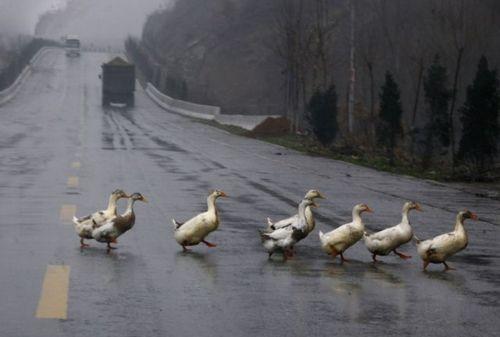 道路を渡る動物16