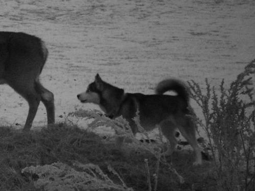 逃げた犬と鹿が友情
