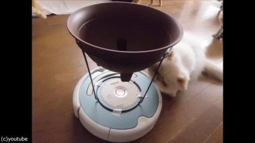 ルンバを乗りこなす猫07