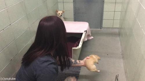 ママ犬が4匹の子犬と再会03
