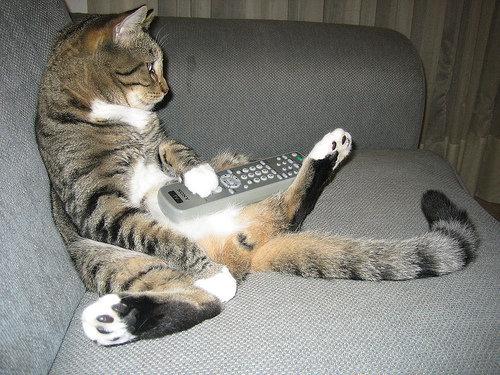 テレビを見るのを邪魔する猫14