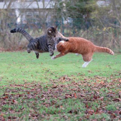 壮絶なる2匹の猫12