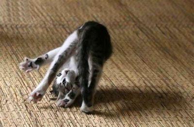 猫攻撃02