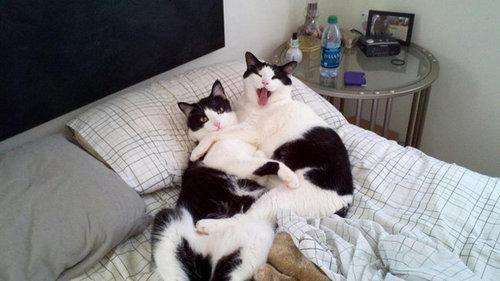 密談する猫たち13