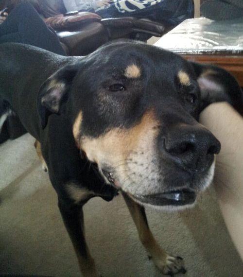 犬の表情06