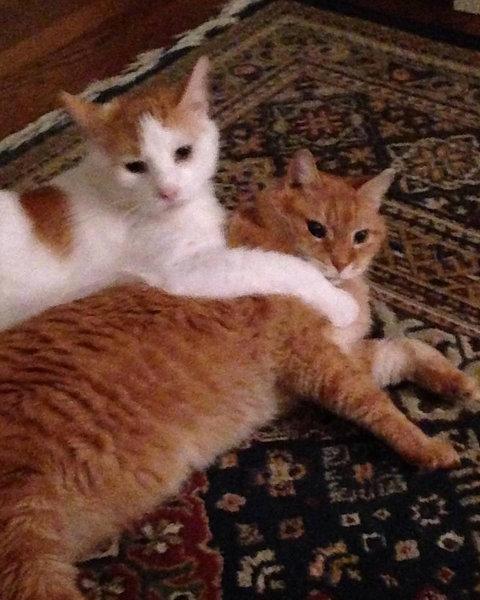猫を2匹飼った理由04